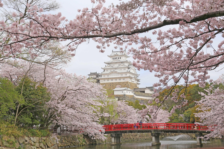 Himeji Castle, cherry blossoms, spring
