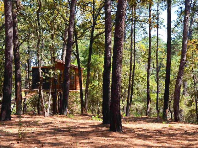 Cabaña suspendida entre árboles dentro de un bosque