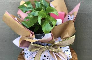 The Indoor Plant Co gift pak
