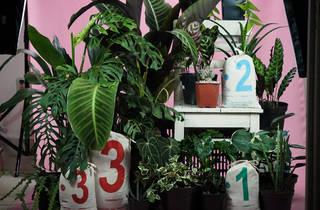 Casa Botánica