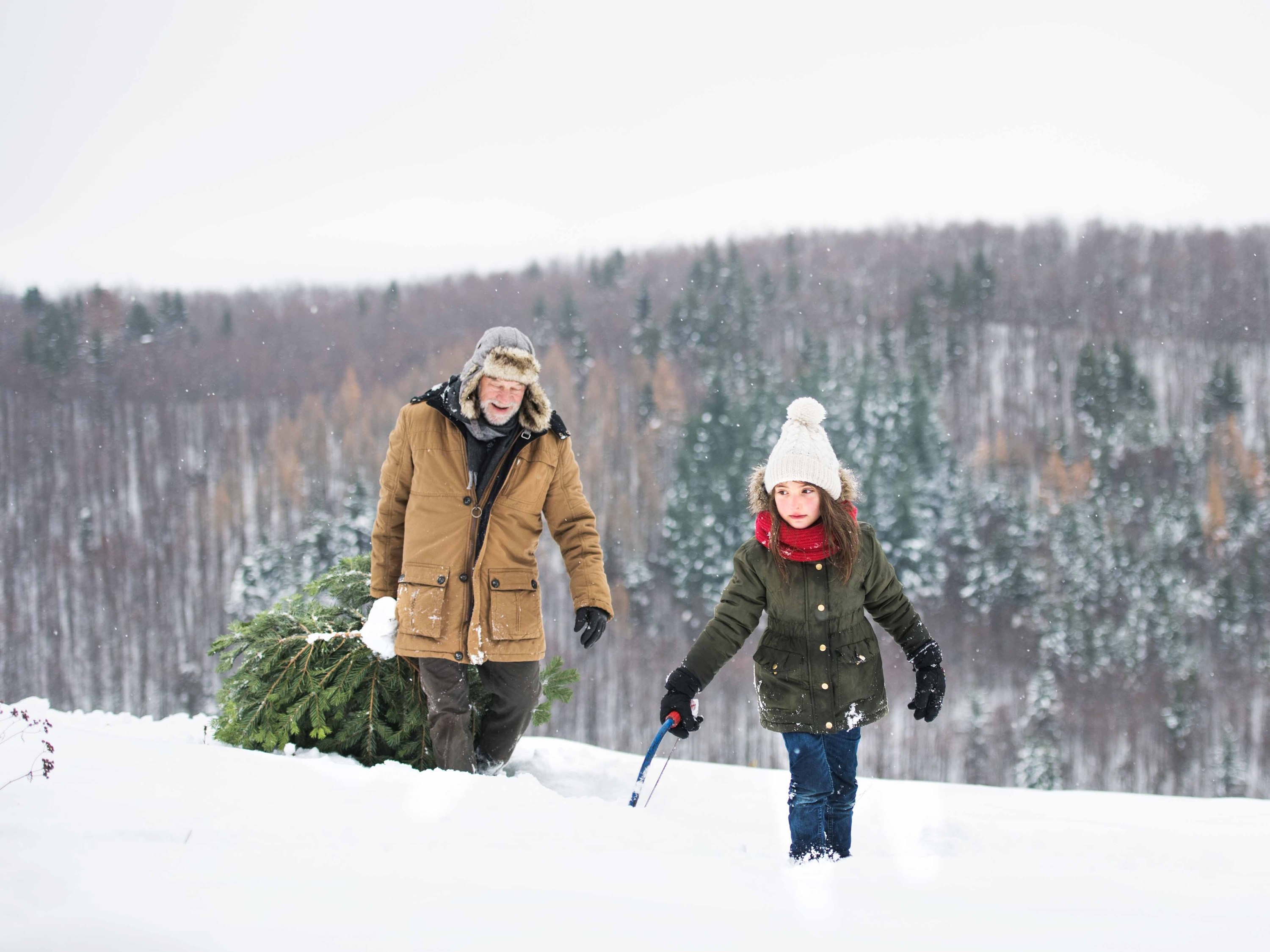 Here is how you can legally cut down your own Christmas tree at a national forest this year
