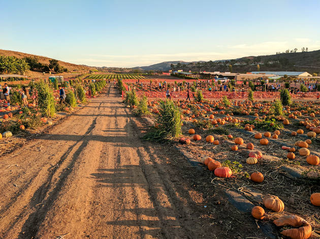 Things to do in the fall in Los Angeles