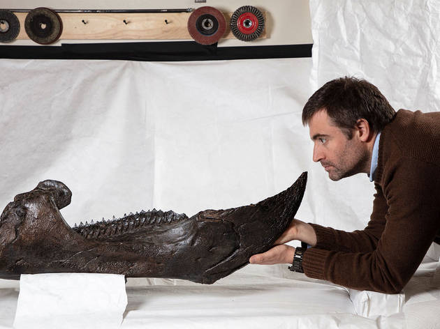 Dr Erich Fitzgerald looking at the lower jaw of the triceratops