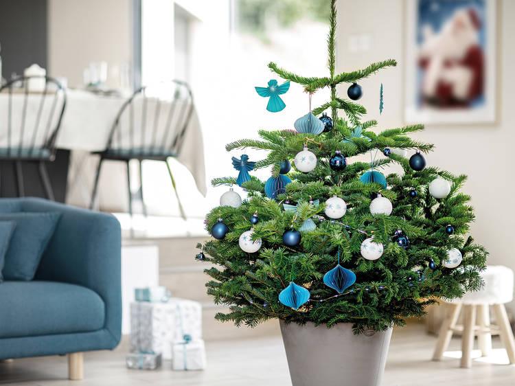 Treezmas : louez un sapin en pot, ils le replantent !
