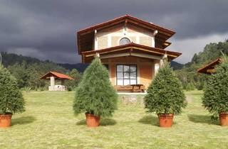Árboles de Navidad en maceta en un jardín