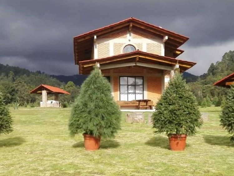 Arbolitos vivos de Navidad en Viveros Amecameca