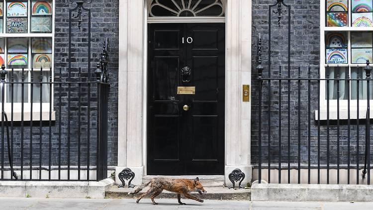 fox, london fox