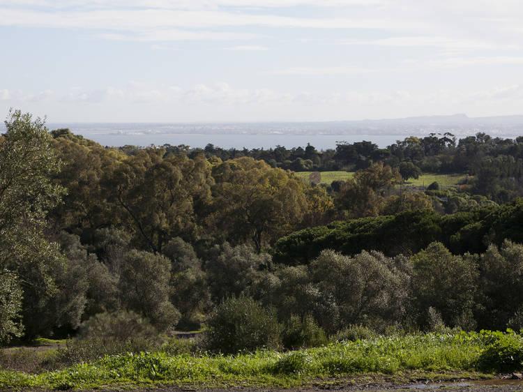 Parque Florestal de Monsanto
