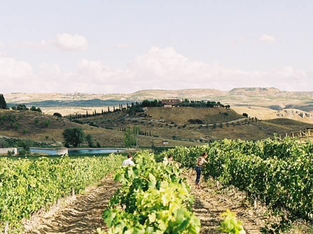 Viñedos Ruta del Vino de Madrid