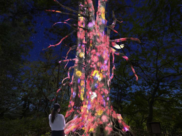 チームラボ、3000本の梅が開花する名所にアート空間を演出