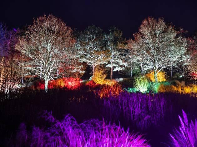 'Glow' Garden Illuminations at RHS Garden Hyde Hall