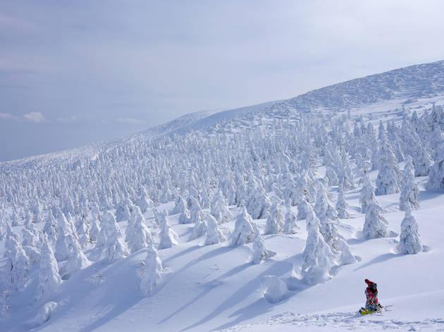 Zao Snow Monsters, Yamagata