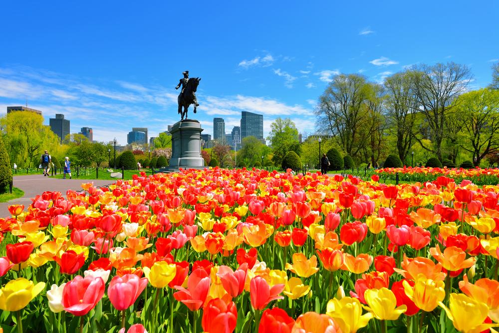 Boston spring, public garden