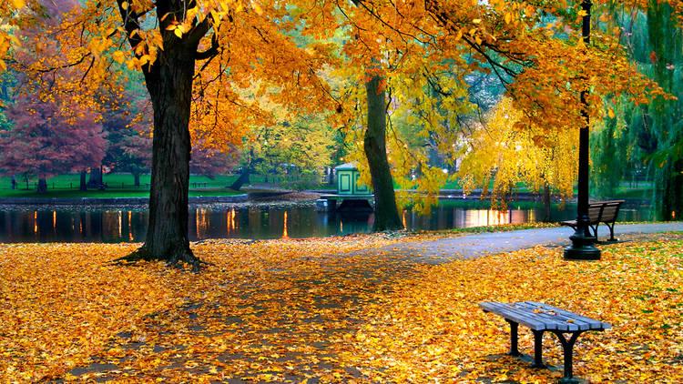 Boston fall, autumn, public garden