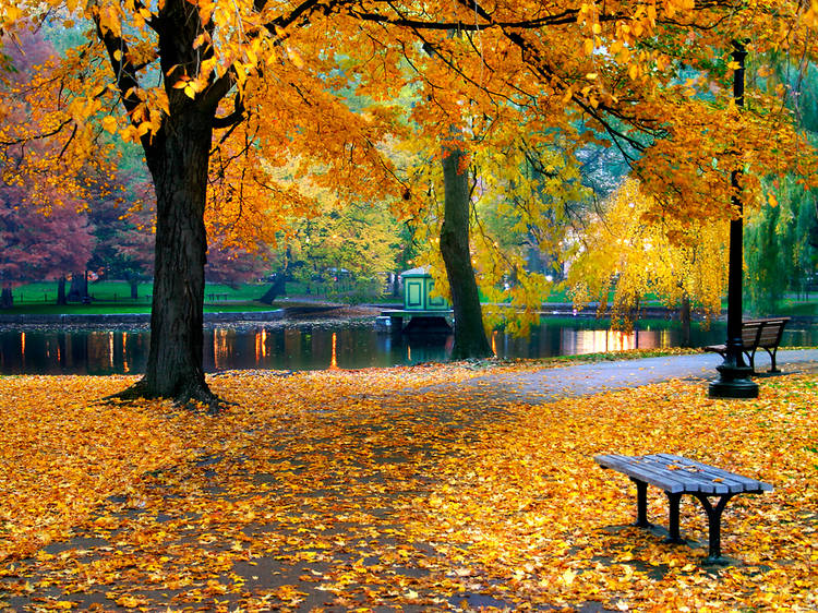 This map predicts when you'll start seeing fall foliage in each state
