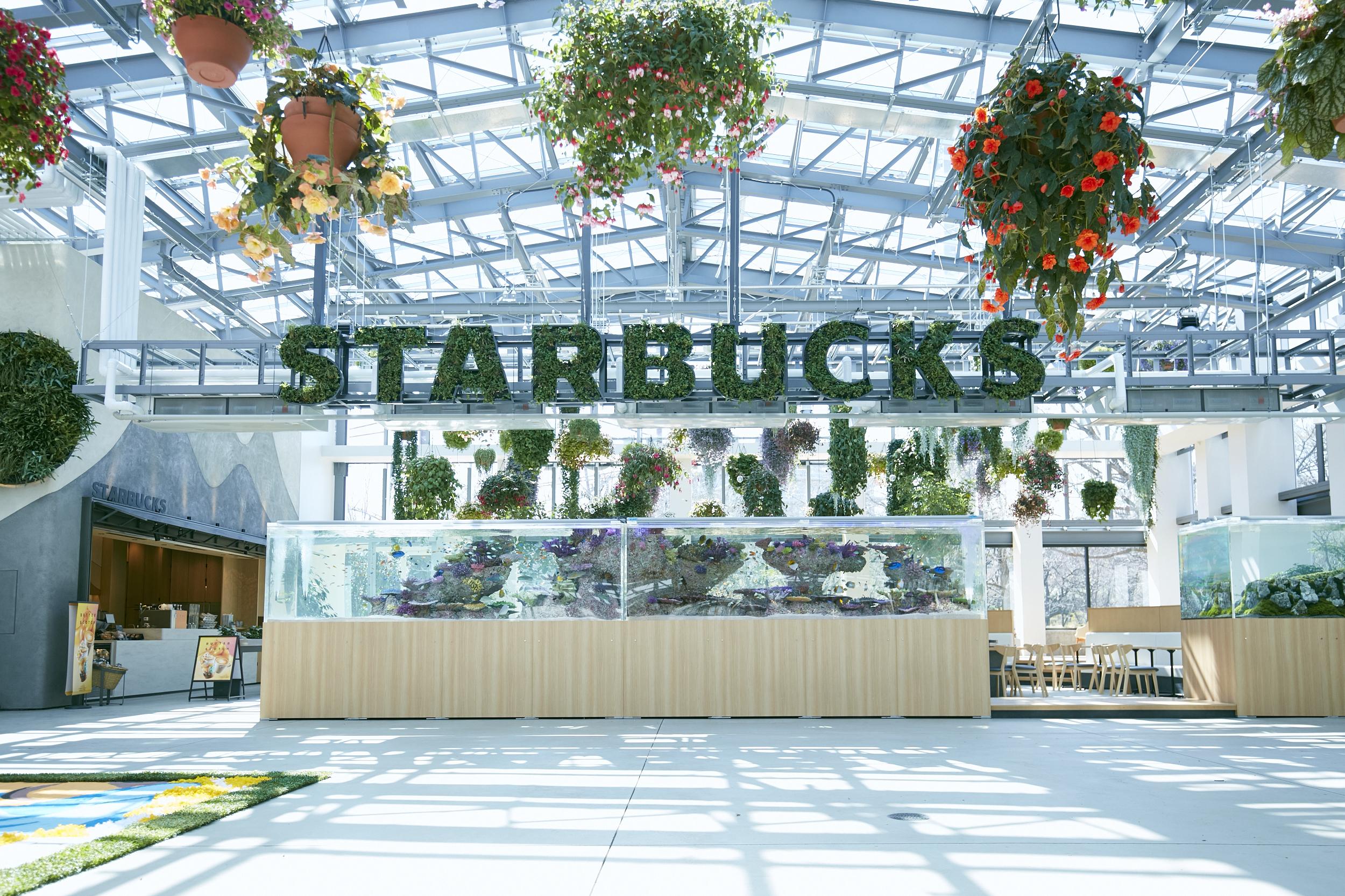 スターバックス コーヒー よみうりランド ハナビヨリ店