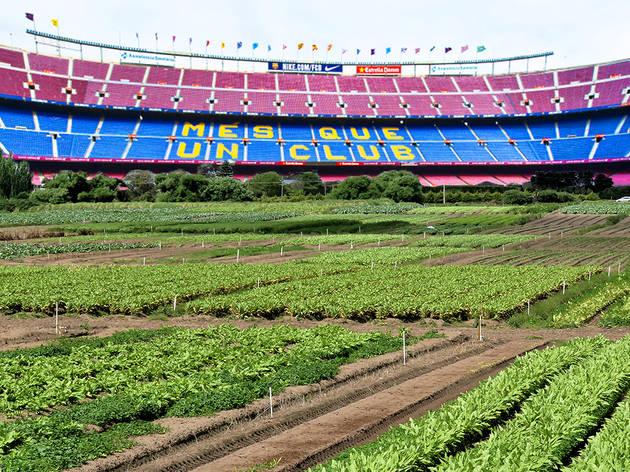 Recreación del Camp Nou como huerto urbano