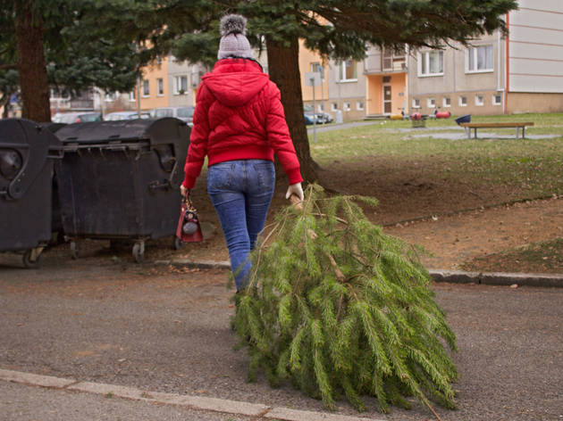 Where to recycle your Christmas tree in Chicago