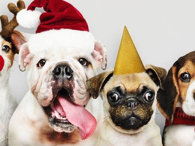 5 opciones de regalos para tu mascota en Navidad y Día de Reyes