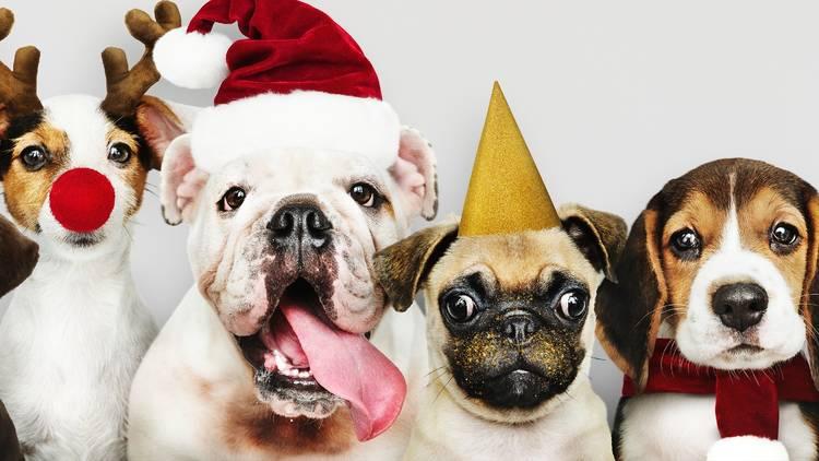 Retrato de cuatro perros con ropas navideñas