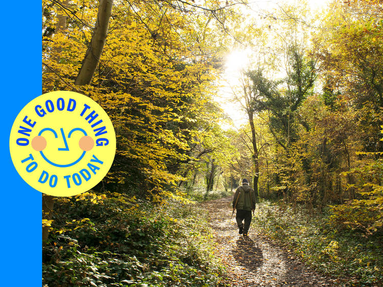 Walk through a swathe of ancient woodland in the middle of Zone 3