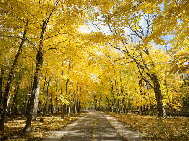 North Branch Trail