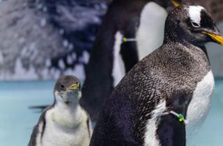 Pingüino en la CDMX