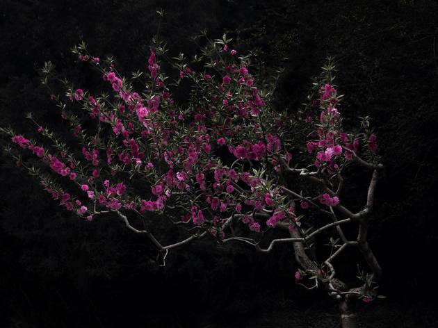 Flowers Gallery/Shen Wei