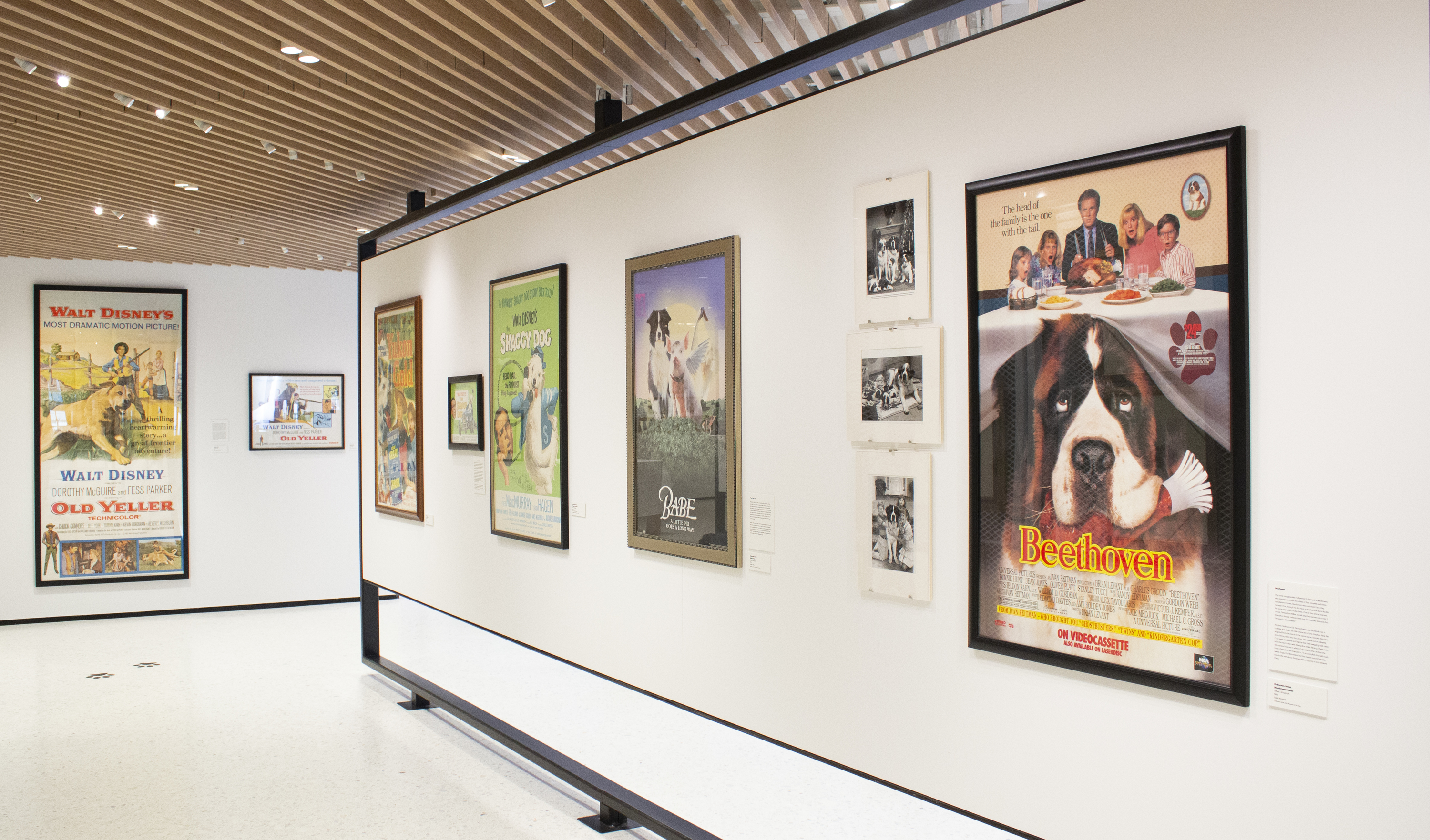 Hollywood dogs are getting their own NYC museum exhibition