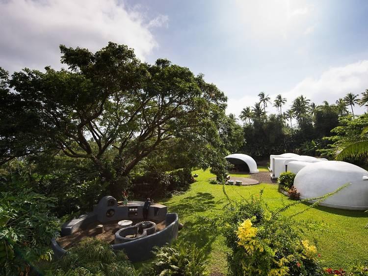 Take a food tour through an organic spice plantation