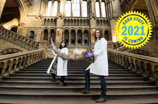 curators holding artefact at Fantastic beasts exhibition at Natural History Museum