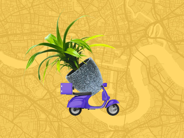 London plant home delivery