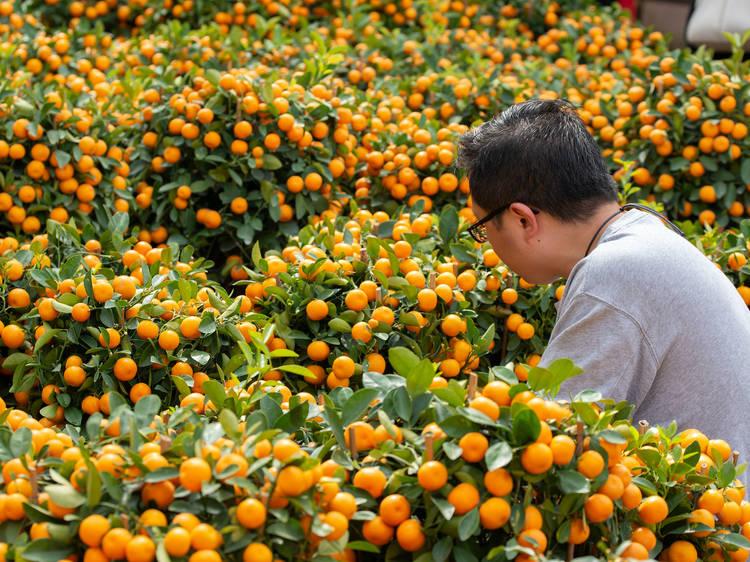 Mandarins and tangerines