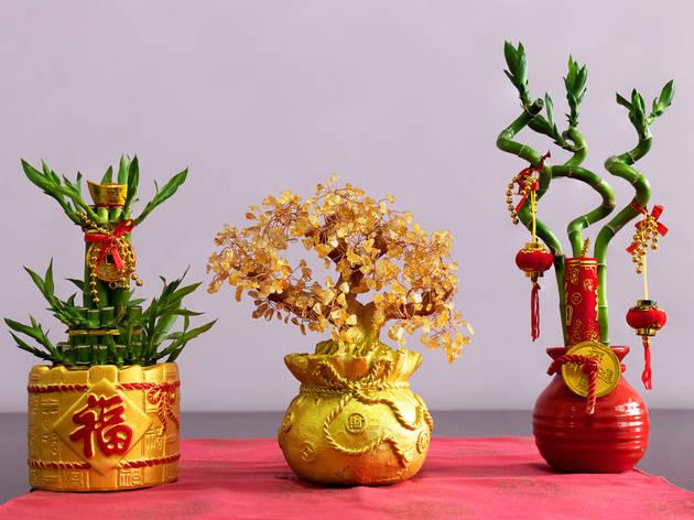 CNY Lucky Bamboo