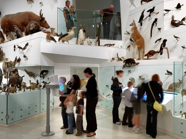 Melbourne Museum's popular taxidermy room is closing permanently