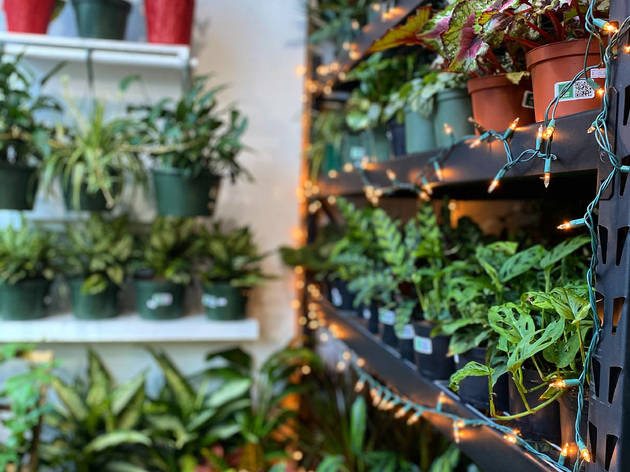 Chicago Plants
