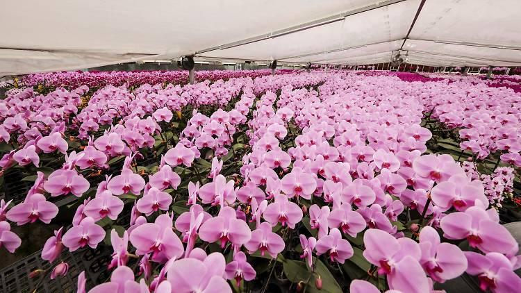 East Point City cny flower market pop-up 2021