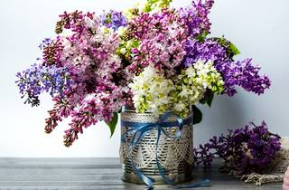 Colorful lilac flowers bouquet in vase