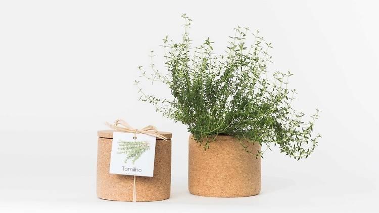 Grow Cork de tomilho da Life in a Bag