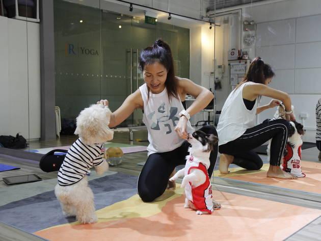 Puppy Yoga Singapore