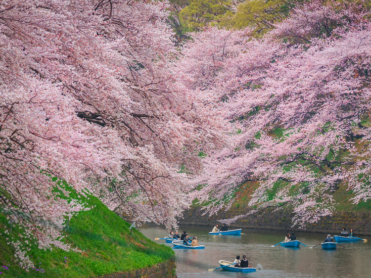 See Tokyo in its many seasonal colours