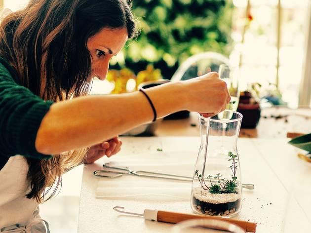 Crea tu propio terrarium