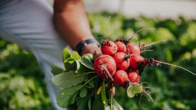 La Hortaliza, frutas y verduras a domicilio en la CDMX