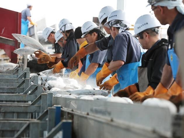 第1回:漁業資源からSDGsを考える
