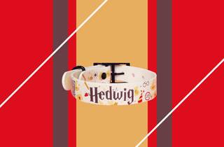 Imagen de un collar para perro con diseño de Harry Potter