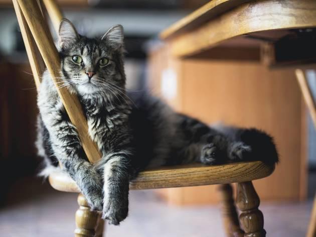adoptar gatos