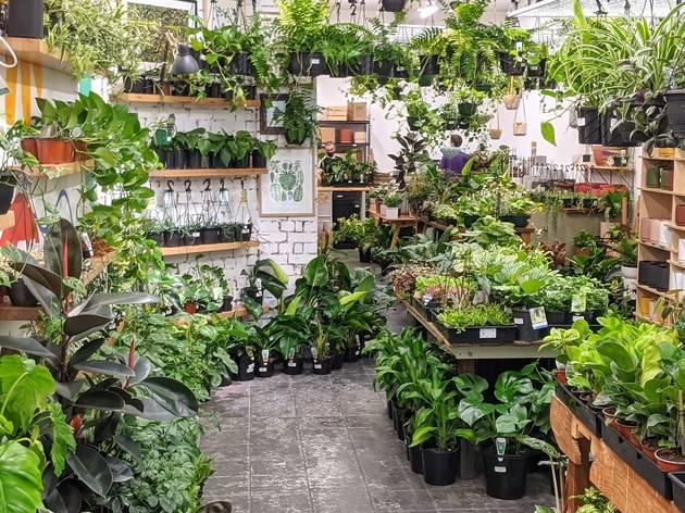 A Greener House plant nursery in Brunswick