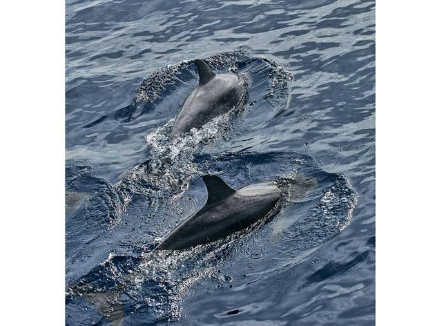 Nadar com os golfinhos