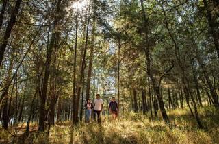 Tres personas posan debajo de los árboles en un bosque