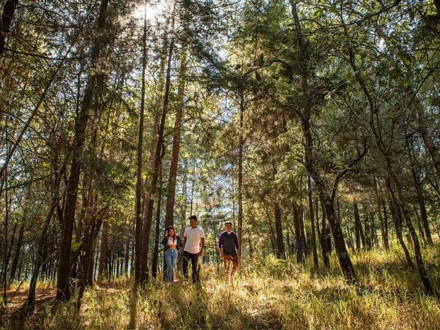 7 lugares para hacer camping cerca de la CDMX